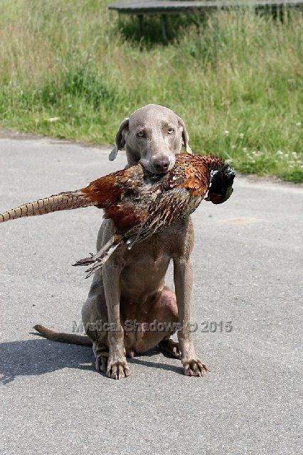 Chanel apport fazant
