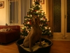 The christmastree