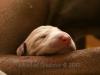 Sleeping in mommies arms