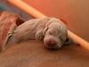 Sleeping on top of mommie