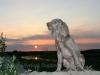 felicia-zonsondergang